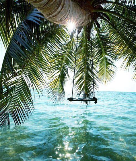 swings over the ocean summer dreams swings from trees over water love maegan