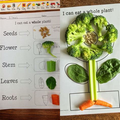 kindergarten activities on plants plant activities for kindergarten preschool first grade