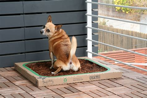 dog balcony bathroom bark potty