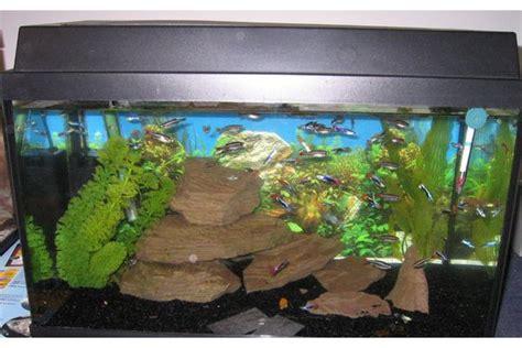 gebrauchtes aquarium kaufen eiche massiv neu und gebraucht kaufen bei dhd24