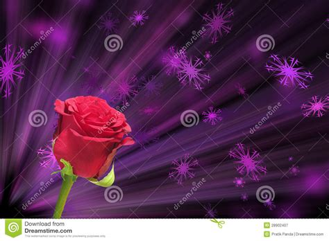 love pink themes pink valentines love rose background stock image image