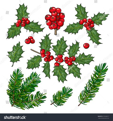 set fir tree mistletoe branches leaves stock vector
