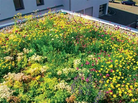 Pflanzen überwintern Balkon 1609 by Dachbegr 252 Nung Anlage Pflege Und Kosten Garten