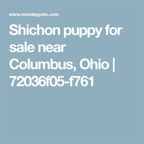 dogs for sale columbus ohio best 25 shichon puppies for sale ideas on puppy yorkie shih tzu mix