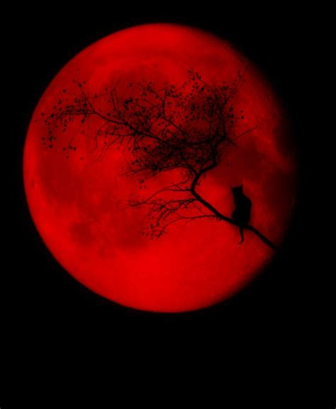 red moon tattoo best 25 moon ideas on blood moon blood