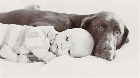 dogs meeting babies ridiculously of dogs meeting babies for the time