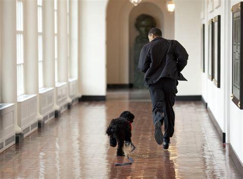 bo the white house dog file bo and obama jpg wikimedia commons