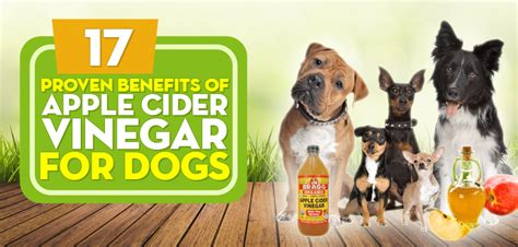 apple cider vinegar for dogs ears 17 proven benefits of apple cider vinegar for dogs no 4 is best