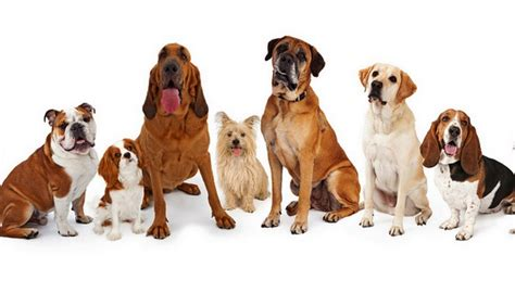 what breed are you quiz best breed quiz to help you choose your next pup top tips