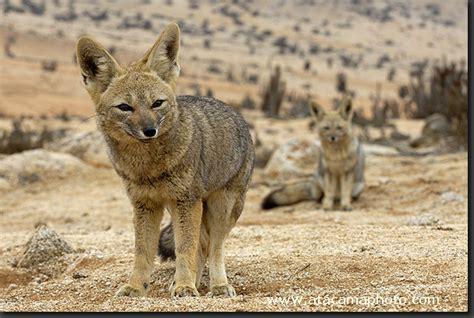 Deserts Animals