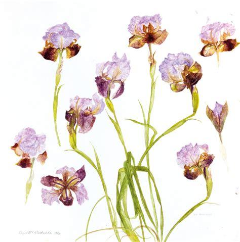 Fendi With Flower Size 28 X 23 Cm Rp 4750000 iris oncocyclus 1996 elizabeth blackadder