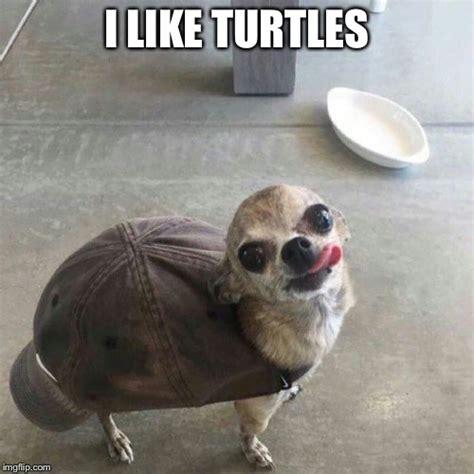 Funny Chihuahua Memes - chihuahua imgflip