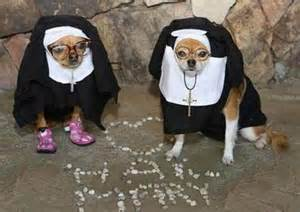 Skunk Costume Hilarious Dogs In Costumes