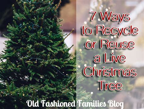 7 ways to recycle or reuse a live christmas tree old
