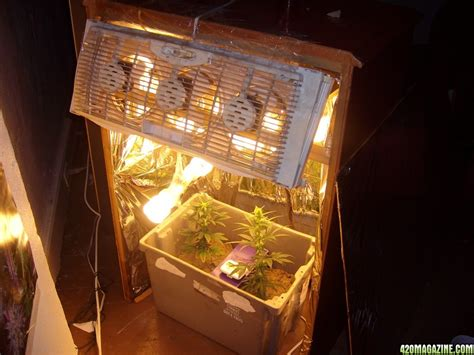 Cfl Grow Light Setup by Investigation On Cfl S Lumen Output Vs Wattage Vs Price