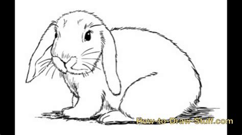 realistic bunny coloring page realistic bunny kids coloring europe travel guides com