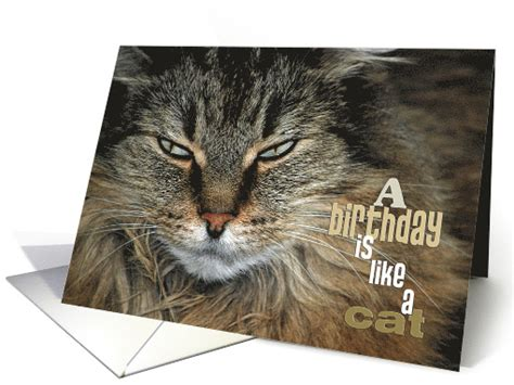 birthday humor close    maine coon cat card