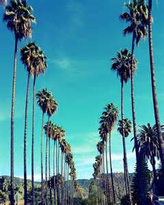 palm tree l palm trees in los angeles california palm tree lined