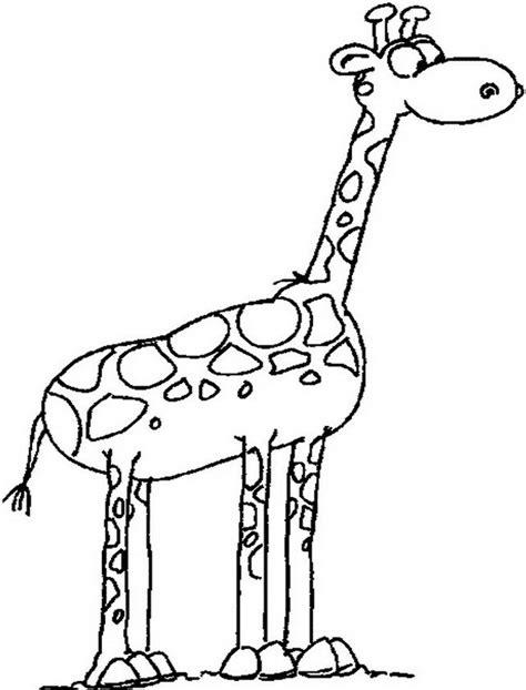 imagenes de jirafas tiernas para dibujar jirafa dibujo para colorear www imgkid com the image