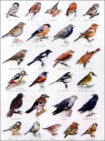 Backyard Bird Identification by Garden Bird Chart The Birds