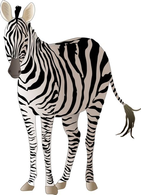 foto zebra design zebra free vector download 188 free vector for