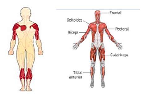 cadenas musculares scielo distrofia muscular de emery dreifuss distrofia muscular