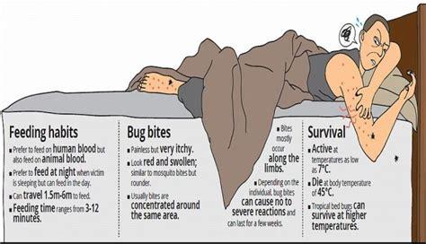 sleeping   enemy bed bugs  painful nightmare