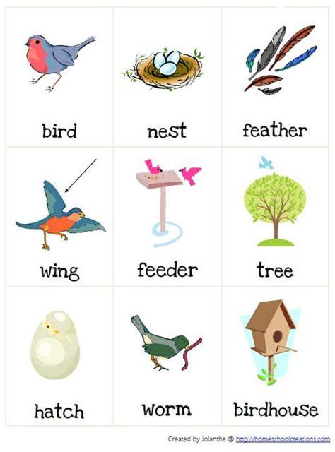kindergarten activities birds spring birds thematic unit part 1