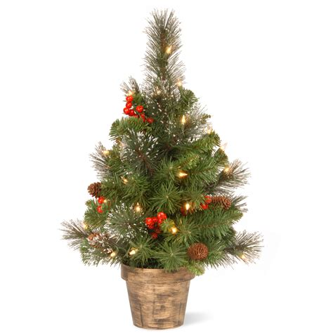 national tree company 2 ft crestwood spruce tree with