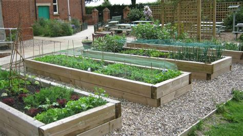 vegetable beds colby primary school
