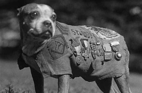 Sgt Stubby Breed Here S Why Working Dogs Outrank Their Human Handlers Barkpost