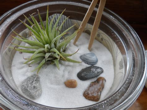 zen garten miniatur items similar to miniature zen garden with air plant