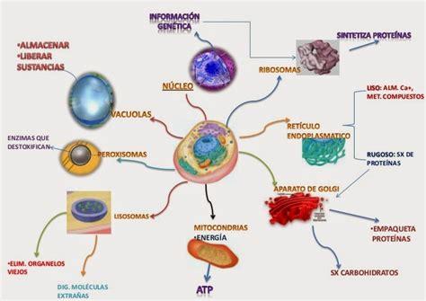 lade sodio biolog 237 a resumen de la materia