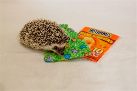 small animal heat l pet hedgehog or small animal emergency travel heat pack
