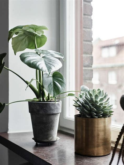 badezimmer deko fensterbank fensterbank deko die farben der natur durch pflanzen