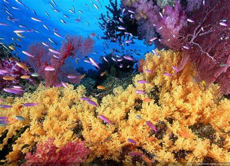 gambar wallpaper alam bawah laut 1001 wallpaper gambar pemandangan bawah laut