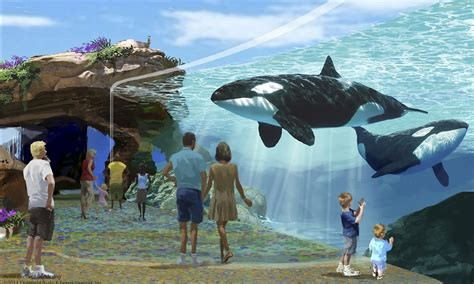 Orca Seal Hiasan Aquarium california bans captive of seaworld orcas earth newswire