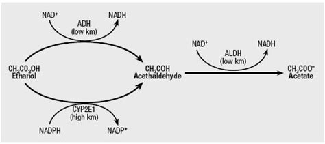 Acetaldehyde Detox by Biology