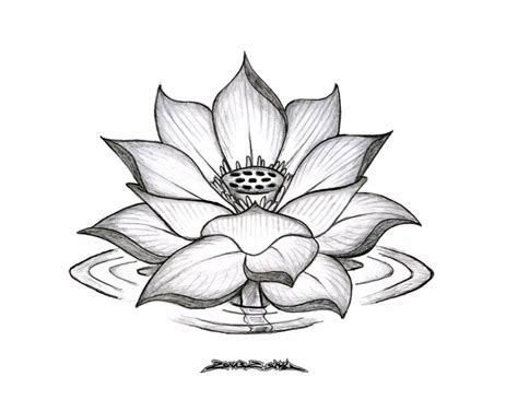 black lotus tattoo grand opening lotus flower tattoo black and grey tattoo fantastic