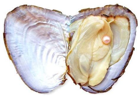 17 best images about oysters 17 best images about ghostdto x oyster on