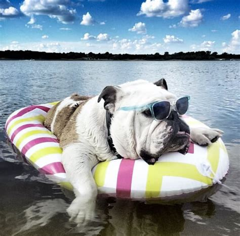 puppy water schedule the days of summer tips on keeping your bully cool and happy bullie post
