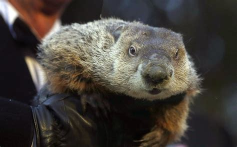 groundhog day 5 facts about groundhog day the morning call