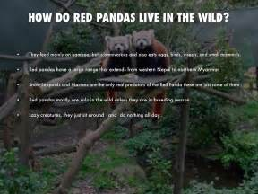 Where Does Live Panda By Peters