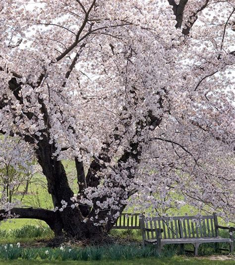 cherry tree magazine 552 best images about magazine on