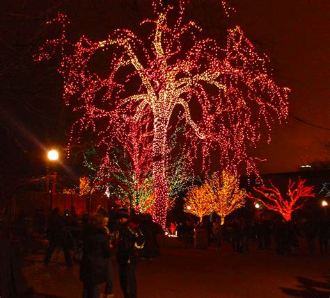 Winter Things To Do In Chicago Zoo Lights At Lincoln Park Chicago Zoo Lights