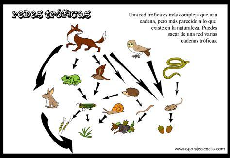 que son cadenas y redes troficas ciencia ambientalista redes y cadenas troficas