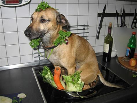 Dog Cooking Meme - puzzels raadsels blog zonder naam