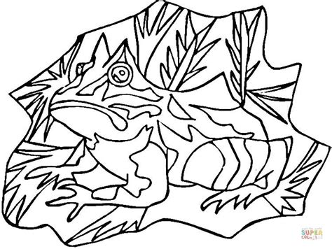 coloring page poison dart frog poison dart frog coloring page free printable coloring pages