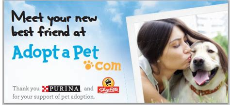 adoptapet dogs what s new at adopt a pet in june 2013 187 shelter knowledge center
