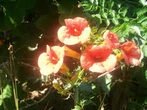 sunny flowers photography wallpaper 6941549 fanpop